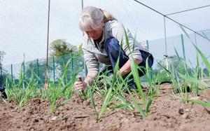 Anh nới lỏng quy định đối với động vật và cây trồng chỉnh sửa gen