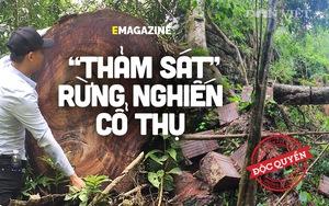 """Phía sau vụ """"thảm sát"""" rừng nghiến cổ thụ khủng nhất Việt Nam!"""