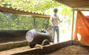 Trai trẻ Ba Vì và giấc mơ xây dựng nền nông nghiệp bền vững