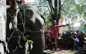 Dân tộc M'Nông ở Tây Nguyên: Con voi mới là đầu cơ nghiệp