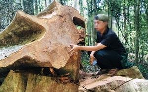 """Gia Lai: Rừng bị phá """"tan hoang"""", từng đoàn lâm tặc nối đuôi nhau chở gỗ xuống núi"""