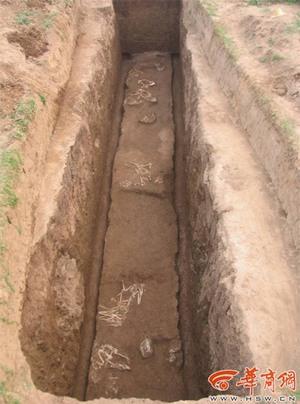 Trong lăng mộ bà nội Tần Thủy Hoàng có giống loài nào chưa từng ai biết đến?