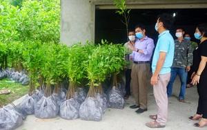 Trung tâm Khuyến nông tỉnh Thái Nguyên cấp gần 8.000 cây na giống cho người dân