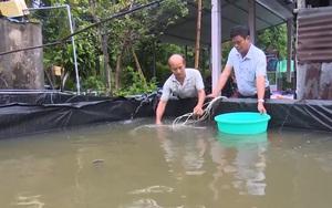 """Hậu Giang: Nuôi loài cá được ví như """"sâm nước"""", đừng hỏi tại sao lão nông này giàu đến thế"""