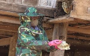 """Bí quyết bắt ong rừng """"đẻ"""" ra tiền của lão nông người Thái"""