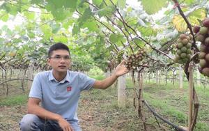 Thái Nguyên: Trồng cây ra chùm quả tím lịm mới được 1 năm, hotboy thạc sỹ đã thu cả trăm triệu