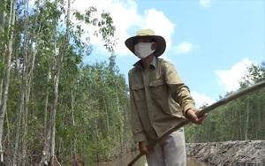 """Những nguyên nhân nào khiến cho tràm đang """"ế thê thảm"""" ở Cà Mau"""
