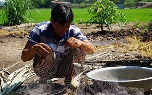 Đồng Tháp: Anh nông dân nuôi cá đồng kết hợp nuôi vịt, trồng lúa, bất ngờ thu nhập cao gấp 3-4 lần độc canh