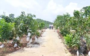Sơn La: Chủ động phương án tiêu thụ nông sản trước tác động dịch Covid-19