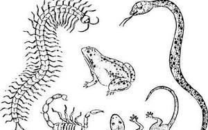Bí ẩn kinh dị về tà thuật cổ trùng của người Trung Quốc và thảm án hậu cung thời nhà Hán