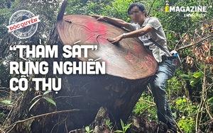 """Vụ """"thảm sát"""" rừng nghiến cổ thụ khủng nhất Việt Nam - Bài 2: Vỡ trận vì để bà con """"không ưng cái bụng"""""""
