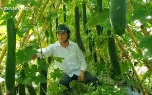 """Nghệ An: Ruộng hoang được Hội nông dân nhận canh tác, trở thành """"tấc đất tấc vàng"""""""