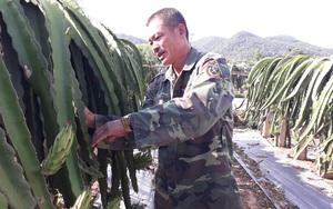 """Thái Nguyên: Trồng 2.000 cây """"rồng xanh"""" ra vạn quả đỏ, nơi heo hút vẫn rủng rỉnh tiền tiêu"""