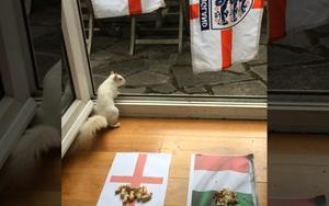 """Clip: Cùng xem các """"nhà tiên tri"""" trổ tài dự đoán đội thắng trận chung kết EURO 2020 giữa Italia vs Anh"""