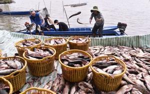 Kiên Giang: Trồng vườn cây trái đặc sản đẹp như phim, nuôi cá ruộng, đồng bào Kh'mer vươn lên khá giả