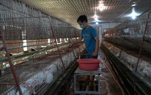 """Cần mẫn làm """"bà đỡ"""" cho những chú thỏ, người nông dân thu lại nửa tỷ đồng mỗi năm"""