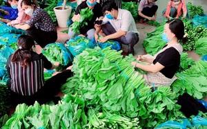 Sở NNPTNT tỉnh Đồng Nai tặng 10 tấn rau củ và 10.000 trứng gà cho TP.HCM