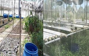 Quảng Ngãi: Sở Xây dựng chưa xem xét đề xuất chi 400 triệu sửa mô hình thực nghiệm trồng rau tiền tỷ trùm mền?