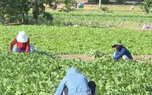 Quảng Ngãi: Hỗ trợ bà con nông dân tiêu thụ nông sản qua bán online