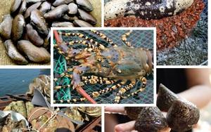 """Đặc sản hải sản """"bổ dương"""" quý như vàng thời xưa chuyên để tiến Vua có giá đắt đỏ thế nào?"""