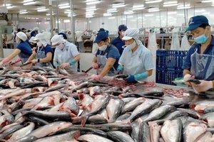 Xuất khẩu cá tra tăng mạnh nhưng người nuôi cá và doanh nghiệp đều...không vui