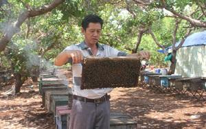 Gia Lai: Thăng trầm nghề nuôi ong du mục, chuỗi ngày sống tạm bợ ở lán trại, bìa rừng