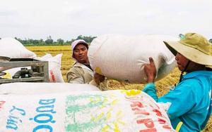Cập nhật: Tình hình cung ứng nông sản, thực phẩm từ ĐBSCL sau quyết định giãn cách xã hội 19 tỉnh, thành miền Nam