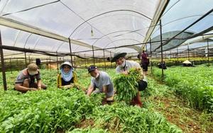 Lâm Đồng: Cung ứng rau, củ, quả phục vụ nhu cầu thị trường giá thấp hơn 30%