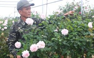 """Hưng Yên: Giải bài toán """"được mùa rớt giá"""" với nghề trồng hoa, nuôi cá"""