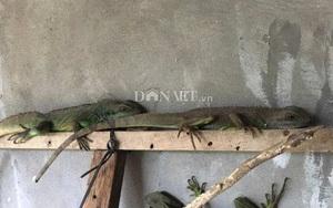 Khánh Hòa: Nuôi loài bò sát độc, lạ, thích ăn cháo bí, nhiều người cứ muốn đến xem thế nào