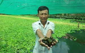 """Ninh Bình: Nuôi con thích """"ngồi mát ăn bát bèo"""", lão nông vùng chiêm trũng có thu nhập khủng"""