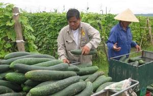 Loại quả bán rất rẻ ở Việt Nam vào mùa hè nhưng công dụng sánh ngang linh chi