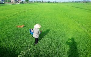 """Ảnh hưởng Covid-19, nông nghiệp Bình Định vẫn tăng trưởng """"ngoạn mục"""""""
