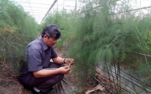 Vừa chống dịch, Phú Xuyên vừa nâng cao thu nhập cho người dân bằng cách nào?