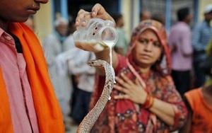 Ấn Độ: Du khách sởn da gà với nghi thức rưới sữa, đối mặt với loài động vật bò sát này