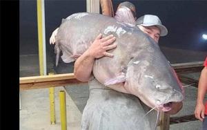 """Anh cần thủ số hên câu trúng cá trê """"quái vật"""" to bằng người trưởng thành nặng gần 60kg"""