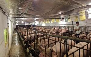 Mang mô hình chăn nuôi lợn hiện đại độc nhất vô nhị về Cao Bằng, chàng thanh niên gặt hái thành công lớn