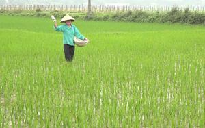 Chủ động phòng trừ sâu bệnh bảo vệ lúa Hè Thu 2021