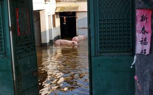 Lũ lụt kinh hoàng, người nông dân Trung Quốc cay đắng nhìn sinh kế bị cuốn trôi