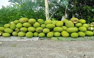 Cập nhật giá mít Thái hôm nay 27/7: Một số tỉnh mở đường dây nóng tiêu thụ nông sản, trong đó có mít Thái