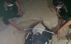 """Bình Định: Cận cảnh rùa """"quý hiếm"""" đẻ 99 quả trứng tại bãi biển xã Nhơn Hải"""