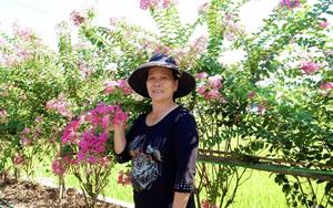 """Quảng Bình: Vợ chồng U70 trồng đường hoa tường vy vạn người mê, khiến cả làng """"phát sốt"""""""