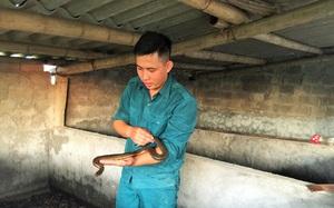 Ninh Bình: Nuôi nhung nhúc rắn bùn, lại trồng cả rau thủy canh công nghệ cao, Văn Đức 9X lời 350 triệu/năm
