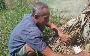 Nuôi chim trời lạ đời, ông nông dân tỉnh Cà Mau cứ bán 1 con be bé cũng có giá cả trăm ngàn đồng