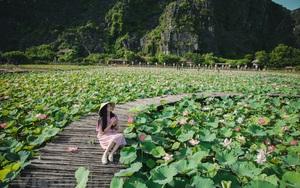 Ninh Bình: Ngỡ ngàng hồ sen dưới chân núi Ngọa Long nở rộ giữa trời mùa Hè ở Hang Múa