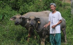 Thái Nguyên: Nuôi con nhai bỏm bẻm cỏ ngọt, chăm nhàn tênh, nông dân đã vui lại còn có tiền