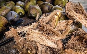 Bỉ muốn hợp tác với Việt Nam xử lý rác thải xơ dừa thành than hoạt tính để xuất khẩu