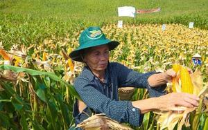 """Việt Nam chi 6 tỷ USD nhập 20,4 triệu tấn nguyên liệu thức ăn chăn nuôi, """"ăn đong"""" đến bao giờ?"""