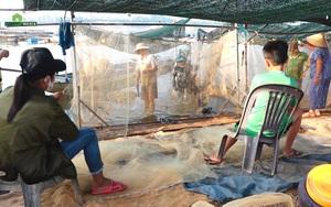 Ngư dân nhộn nhịp vào mùa đánh bắt cá cơm ở hồ Trị An
