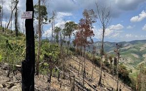 """Vụ """"Rừng bị phá tan hoang, lãnh đạo mất đoàn kết"""": Sẽ xử lý trách nhiệm chủ rừng"""